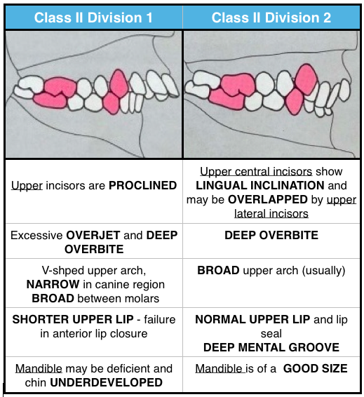 canine to relationship occlusion